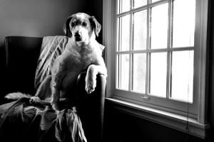 dog by the window waiting