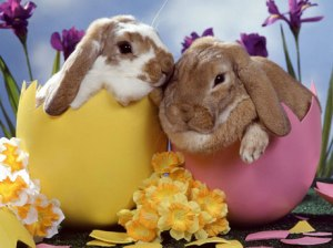 bunch-of-bunnies-coming-out-of-an-egg